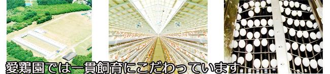 たまご飯しょうゆ 2本入り | 養鶏農場の産直たまご通販ショップ 愛たまご